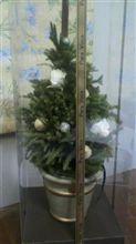 プリザーブドフラワーのツリーで Merry Christmas!