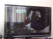 テレビ買いました