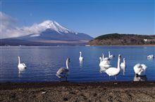 2009年撮り納め(その1) 紅富士(朝焼け)、白糸の滝