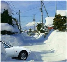 雪に弱い..○○○?