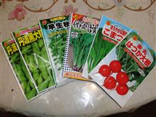 野菜の種購入