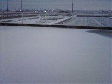 白いです(^-^;