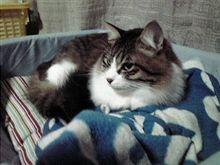 久々に猫。