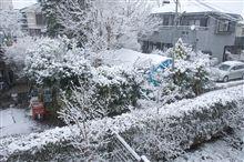 東京、降り続く雪