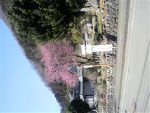 春かな…(^o^)v
