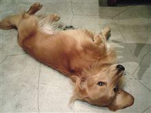 お店のアイドル犬「ゴン」