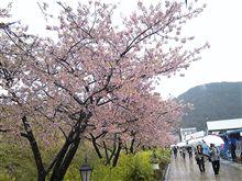静岡県河津に来てます。