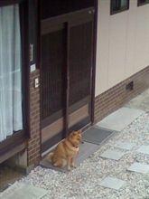 うちの番犬