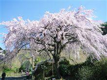 もう桜の季節ですね~♪