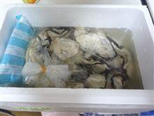 7ヶ月になりました!&仙台の牡蠣