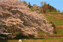 奈良のお花見オフ開催のお知らせ