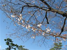 桜 2010.3.21