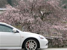 桜 2010.3.28