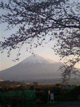 桜と富士山♪(*^ ・^)ノ⌒☆