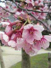 春はすぐそこに(^_^)