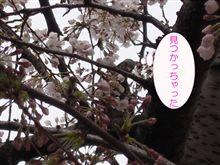 【春なのに】桜を食べてるそこのアナタ【寒い】