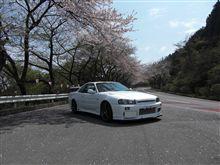日本人は桜が好き