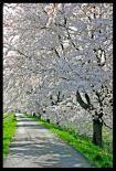 春ですねぇ・・・新年度ですねぇ・・・・生きてます(^^)v