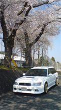 桜とBH…。