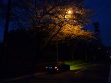夜桜見てきたよ~♪