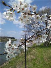 春うらら・・