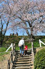 桜もいろいろ