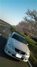 桜咲いてました(゚∀゚)アヒャヒャ~♪