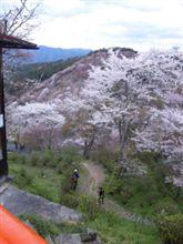 吉野千本桜♪