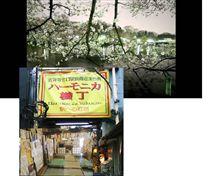 ジョウジで夜桜