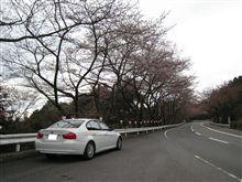 先週末のターンパイクでの桜トンネル報告ヾ(@^▽^@)ノ