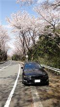 ターンパイクの桜