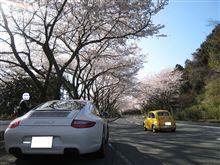 ターンパイクの桜満開 現地調査┌( ・ ω ・ )┘