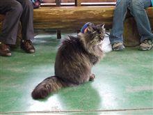 猫の駅長さんの横顔。
