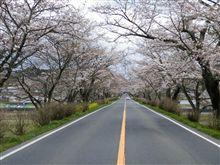 ★喜連川の桜並木★