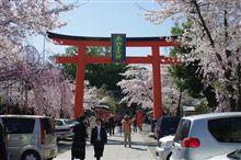 平野神社に桜散策