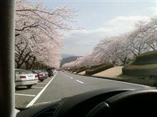 桜とFSW