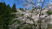 奥多摩桜雪日和
