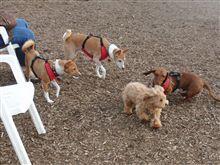 Dog Off-Leash Area