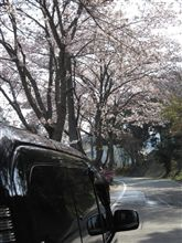 sakura… with SPA Gallary