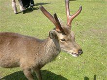 今日は奈良公園へ