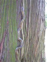 ヘビを見たらィイことあるんだっけ