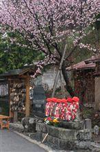 まだ桜が・・・in桧枝岐