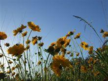 花畑の季節です