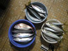 今日も漁業(爆