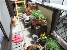 天気の良い日は園芸作業