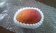 おマンゴー