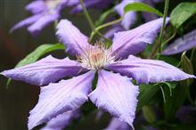 散歩中に見掛けた花