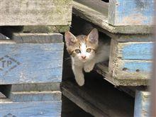 裏の敷地に子猫が
