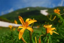高山植物と滝を見に…