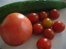朝採りお野菜